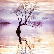 Дрвото Ванака на езерото Ванака, Нов Зеланд