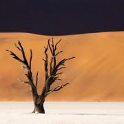 Дрво старо 800 години во Намибија