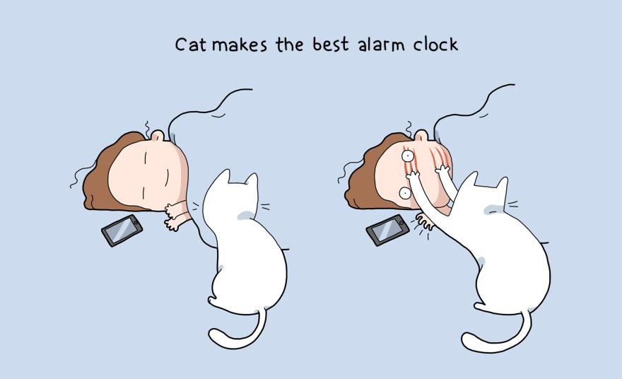 Мачката е најдобриот будилник