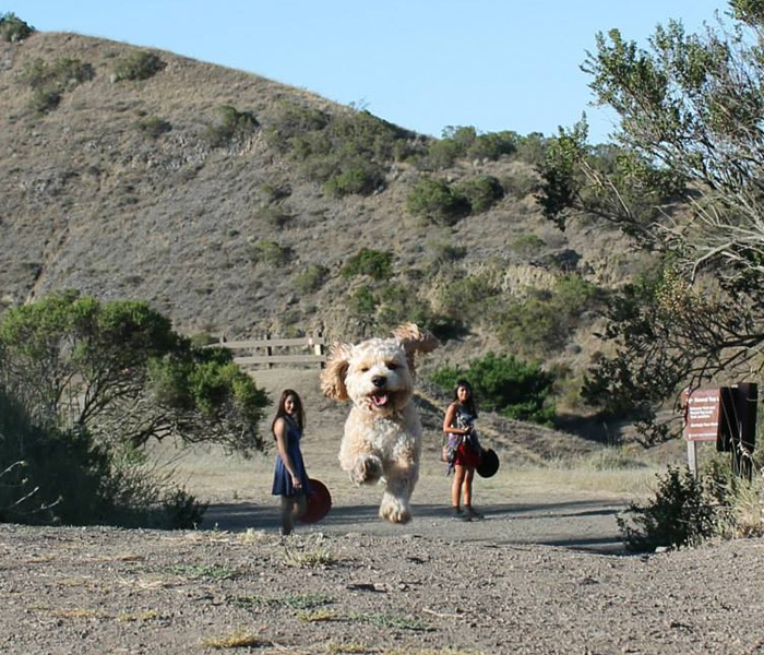 (1) Совршено темпирани фотографии во кои кучињата изгледаат како џинови