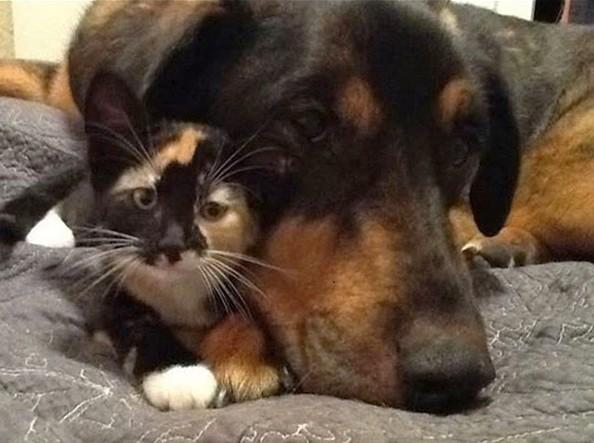 Кучето Чарли умрело пред 2 недели од рак. мачката Скаут го сакала повеќе од сè.