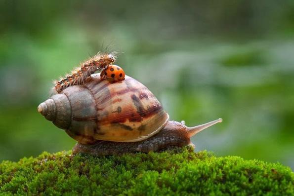 (11) 11 мрзливи животни кои се осмелиле да ја пробијат бариерата на видовите за превоз