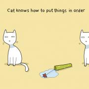 Мачката знае како да ги доведе нештата во ред