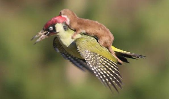 (2) 11 мрзливи животни кои се осмелиле да ја пробијат бариерата на видовите за превоз