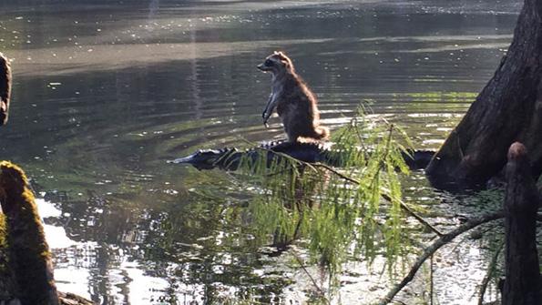 (3) 11 мрзливи животни кои се осмелиле да ја пробијат бариерата на видовите за превоз