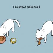 Мачката знае што е добра храна