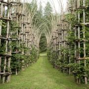 Катедрала од дрвја