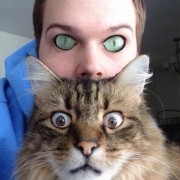 Судејќи по погледот, мачкава вели да бегаме