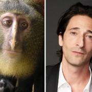 Лесула мајмун и Адријан Броди