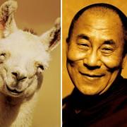 Лама и среќен Далај Лама
