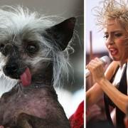 Куче и Лејди Гага