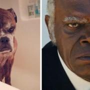 Куче и Семјуел Л. Џексон