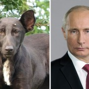 Куче и Владимир Путин