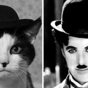 Мачка и Чарли Чаплин