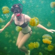Пливајте со милион медузи во езерото Палау