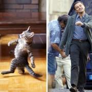Мачка и Леонардо Ди Каприо