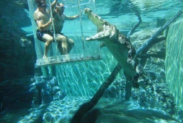 Нуркајте во кафезот на смртта каде ќе се сретнете очи в очи со крокодили убијци во Дарвин, Австралија