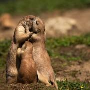 Семеен бакнеж