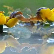 Бакнеж на полжави
