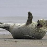 15 насмеани животни кои ќе ви го разубават денот