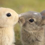 Зајчиња кои се бакнуваат