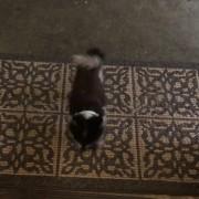 Културно кутре си ги брише шепите пред да влезе во домот