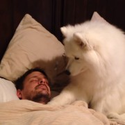 Погледнете како ова куче го буди својот сопственик на најнежниот начин што досега сте го виделе