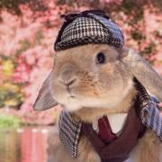 Ова елегантно и дотерано зајаче е најдобриот модел кој неговата сопственичка може да го посака