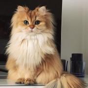 Запознајте го Смуди: Најфотогеничното маче во светот