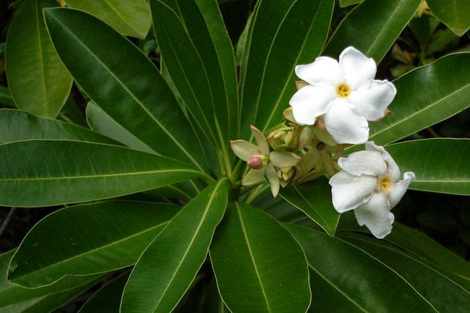 Кои се најотровните растенија во светот?