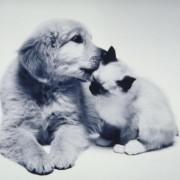 Фотографии кои ја покажуваат едноставната вистина: Мачињата и кучињата се најдобри пријатели