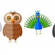 Интересен и необичен тест: Каков е вашиот птичји карактер?