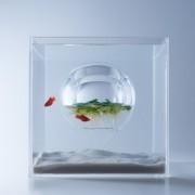 Модерни 3Д печатени аквариуми ја комбинираат уметноста и природата