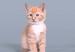 Како се менувала убавината на мачињата во последниве 100 години?