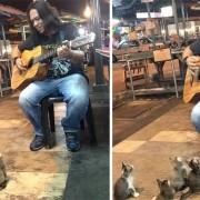 Погледнете како овие 4 мачиња стануваат најверните слушатели на овој уличен музичар