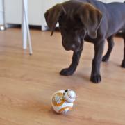 """Слатко кутре се запознава со неодоливото роботче од """"Војна на ѕвездите"""""""