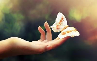 Постојано гледате пеперутки? Очекувајте прекрасни спомени во животот!