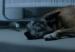 Емоционална приказна за едно куче која испраќа моќна порака до сите сопственици на миленици