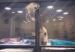 Одлучно маче се обидува да влезе во кафезот на своето најдобро другарче кутре