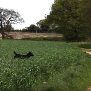 Ова куче не може да престане да скока од среќа затоа што има можност да си игра на отворено