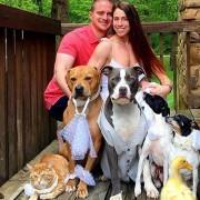 Необично семејство: 4 кучиња, 1 мачка, 2 патки и брачен пар кој очекува бебе