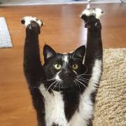 Оваа мачка упорно застанува на две нозе со предните шепи во воздух, а никој не знае зошто