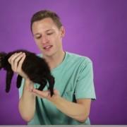 Погледнете ги овие луѓе кои за прв пат држат мали мачиња