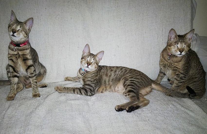 (10) Приказна што го стоплува срцето: Никој не ги сакал овие 3 слепи мачиња, но на крајот им се насмевнала среќата