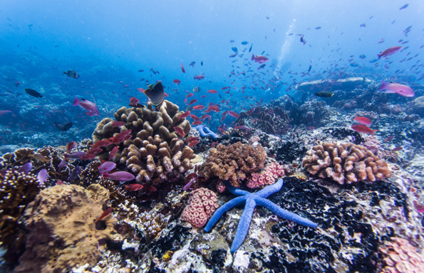 (6) Палаван: Најубавиот остров на светот е чиста перфекција