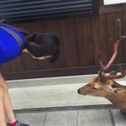 Културен елен се поклонува по секое парче храна