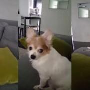 Ова куче мрази кога неговиот сопственик му покажува среден прст