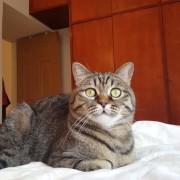 Мачка која обожава да слуша класична музика
