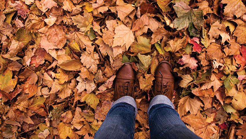 5 вида есенски објави на социјалните мрежи кои треба да се забранат со закон