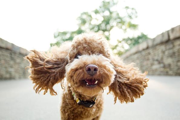 (1) Дали знаете зошто вашето куче е посреќно од вас?